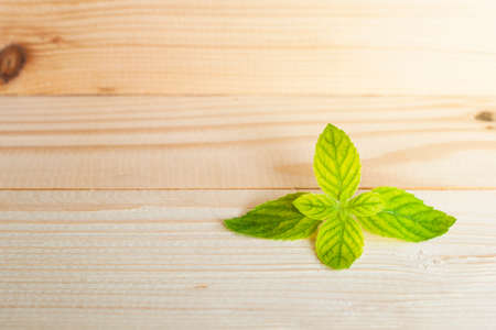 menthol: Fresh raw mint leaves on wood background with copy space