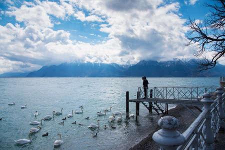 A woman feeding swan with beautiful landscape snow mountains view at lake Geneva, Vevey, Switzerland