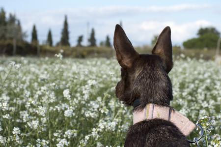 hound dog: hound dog in the nature park Stock Photo