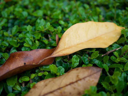 bosk: The defoliation with raindrop on the trees