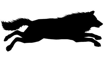 samoyed: Wolf Silhouette 7 Illustration