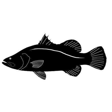 bream: Barramundi Fish Vector Art Illustration
