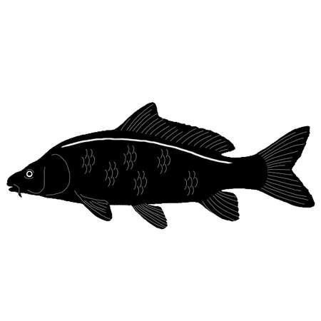 crucian carp: Carp Fish Vector Art Illustration