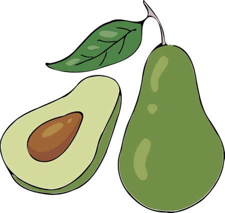 Vector - Avocado Fruit