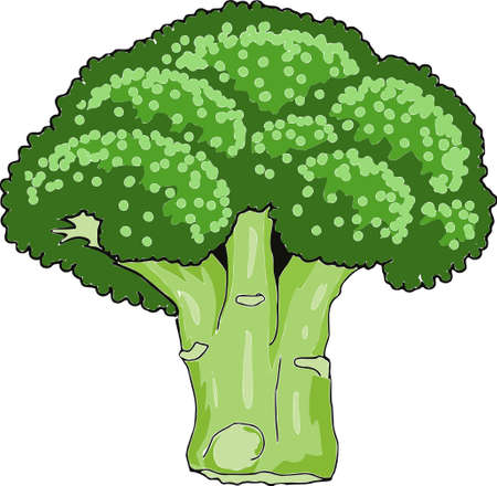 Broccoli Vector illustration isolated on white background.