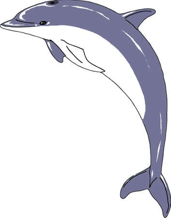 Vector Illustration of colored dolphin 일러스트