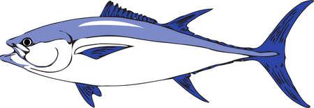 Vector - Illustration Tuna Fish
