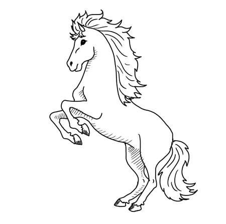 Vector - White Horse