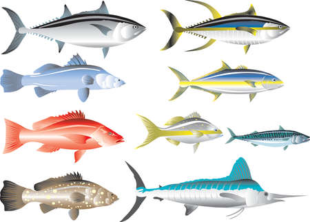 Vector - Marine Fish