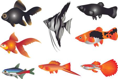 Vector - Aquarium Fish Freshwater set Ilustração