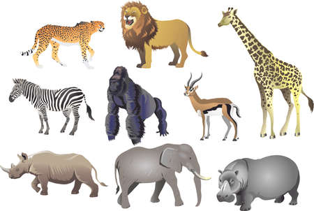 Group Of African Animal Wild Life , Cheetah, Lion, Giraffe, Zebra, Gorilla, Antelope, Rhino, Elephant, Hippopotamus - Vector Illustration