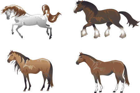 Arab Stallion, Shire Horse, Animal , Mustang And Thoroughbread - Vector Illustration
