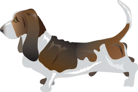 Basset Dog  , Pet Animal - Vector Illustration Ilustração