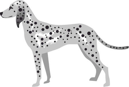 Dalmatian Dog , Pet Animal - Vector Illustration Ilustração