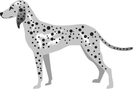 Dalmatian Dog , Pet Animal - Vector Illustration Illustration
