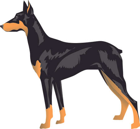 Doberman Pincher, Police And Army Guard , Pet Animal - Vector Illustration