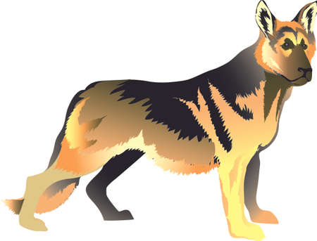 German Sheperd Dog, Herder - Vector Illustration