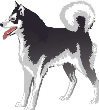 Malamute. Alaskan Siberian Arctic Dog - Vector Illustration
