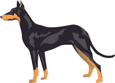 Manchester Terrier, mini pincher Dog - Vector Illustrartion