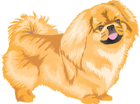 Peking Dog, Pet Dog , Pet Animal - Vector Illustration Ilustração