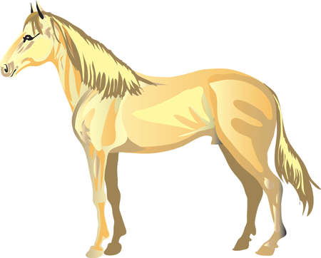 Akhal Tekhe  Horse,   Animal , Draught Stallion Galop - Vector Illustration