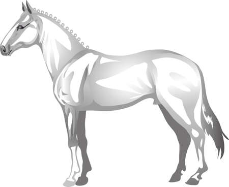 Lippizaner  Horse,   Animal , Draught Stallion Galop - Vector Illustration