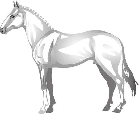 Lippizaner  Horse,   Animal , Draught Stallion Galop - Vector Illustration