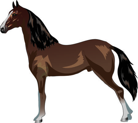 Saddlebred Horse, Animal , Draught Stallion Galop - Vector Illustration