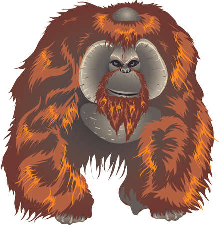 Orangutan, Big Ape From Asian Jungle Indonesia - Vector Illustration