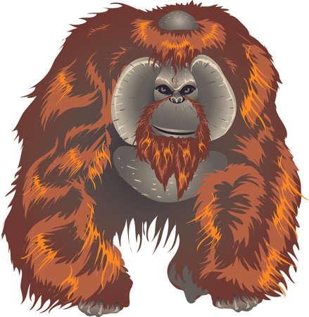 Orangutan, Big Ape From Asian Jungle Indonesia - Vector Illustration
