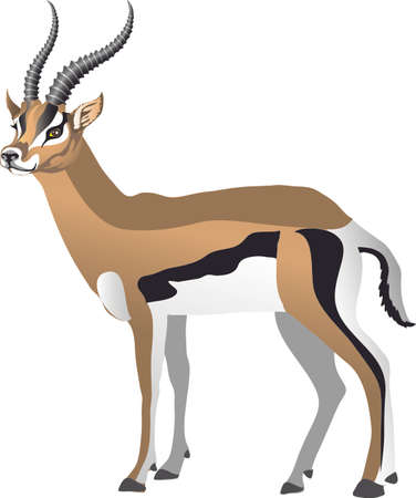 Gazelle Deer Sub Speciest of Antelope from Africa - Vector Illustration