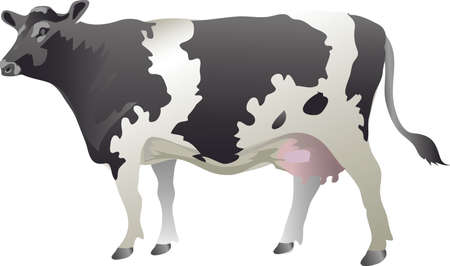Cow Catlle , Lifestock  Milk, Holstein Friesian Cow - Vector Illustration Ilustração