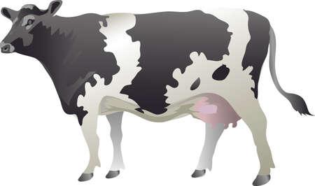 Cow Catlle , Lifestock  Milk, Holstein Friesian Cow - Vector Illustration Illustration