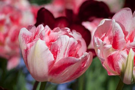 close up: Flower Close Up