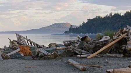 beachcombing: Scenic Driftwood On the Beach