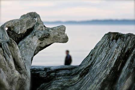 beachcombing: Driftwood On the Beach