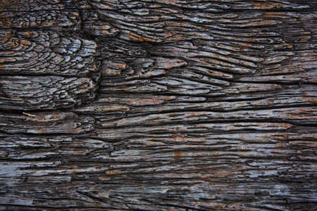 Texture from a bark of an old tree