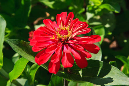 red flower photo