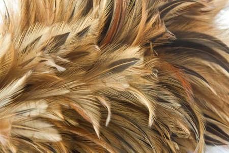 chicken feather background Imagens