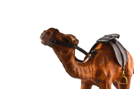 camel isolated on a white background Stock Photo - 12921094