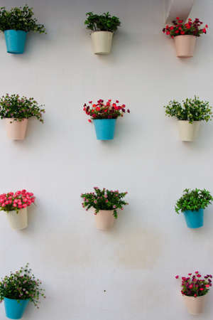 flowers in the pots on white background  photo