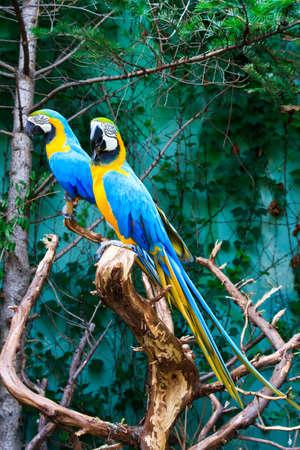 two parrots: beautiful parrots