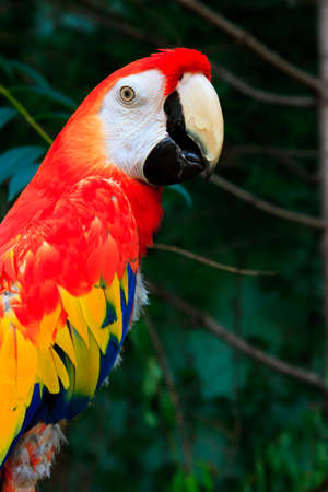 beautiful parrots photo