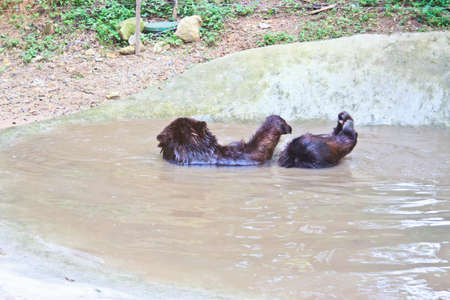 wet bear: Big Brown Bear