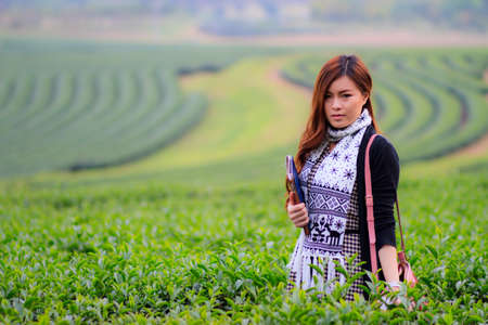 sencha: Unidentified hill tribe show how to harvest green tea in Chiang Rai, Thailand