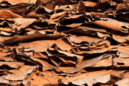 dead leaves: Hojas muertas dispararon ideal para los fondos