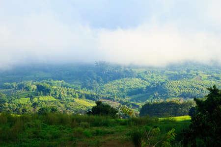 evergreen forest: Evergreen Forest Background