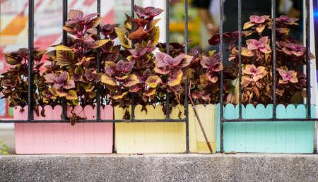 geranium color: flower in fancy color pot