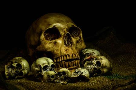 human skull still life background