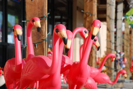 Many plastic pink garden flamingos, looking in all directions